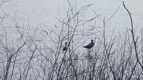Three wading birds Royalty Free Stock Photos