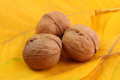 Three walnut on yellow leaves Stock Photo