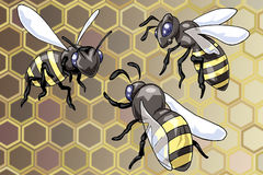 Three wasps. Illustration of three flying wasps - Cartoon style - Abstract hive background Stock Photo