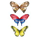 Collection of three butterflies. Three watercolor butterflies. Insects isolated on white. Hand painted illustration for summer design royalty free illustration