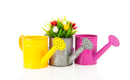 Three watering can with colorful tulips Stock Photos