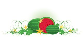 Three Watermelons Stock Photo