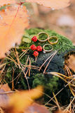 Three wedding rings on the old stump with unripe blackberries in the autumn forest Royalty Free Stock Image