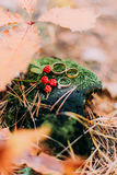 Three wedding rings on old stump with unripe blackberries in the autumn forest Royalty Free Stock Photo