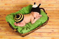 Three week old baby girl wearing bumblebee costume. Three (3) week old newborn baby girl wearing a crocheted black and yellow bumblebee costume. The infant is Royalty Free Stock Images