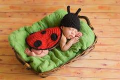 Three week old baby girl wearing ladybug costume. Three (3) week old newborn baby girl wearing a crocheted black and red lady bug costume. The infant is sleeping Stock Image