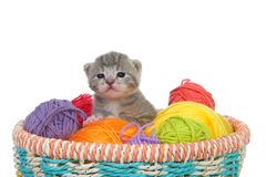 Tiny tabby kitten in a basket of yarn balls. Three week old grey and white stripped tabby kitten sitting in a basket of yarn balls in multiple colors looking at stock image