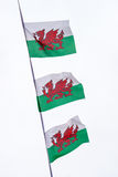 Three Welsh flags flying against a white background Royalty Free Stock Photo