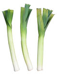 Three Welsh green leeks. Royalty Free Stock Photos