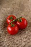 Three wet cherry tomatoes on jute cloth Stock Photos