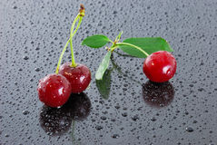 Three wet red cherries. Royalty Free Stock Photo