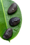 Three wet spa stones on a green leaf Royalty Free Stock Photo