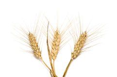 Three wheat spikes Royalty Free Stock Image