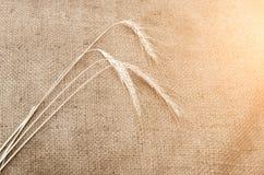 Three wheaten spikelet on sackcloth. Three wheaten spikelet on sackcloth in sunlight Stock Photo