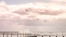 Three of white bird are flying above the big wave sea under huge stock images