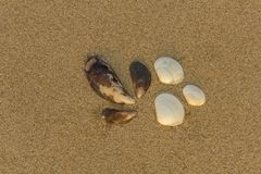 Three white and three brown shells close-up on yellow sand. natural surface texture royalty free stock images