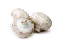 Three White Button Mushrooms Stock Photo
