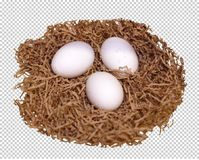 Three white eggs lie in the nest, transparent background, png stock images