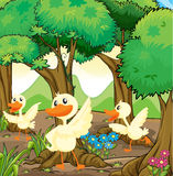 Three white ducks in the middle of the woods Stock Images