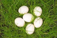 Three white eggs in green grass Royalty Free Stock Photography