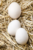 Three white eggs lie in the straw Stock Photography