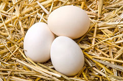 Three white eggs lie in the straw Stock Images