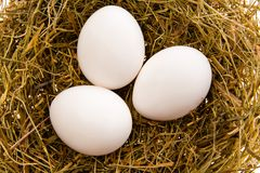 Three white eggs in a nest. Three chicken white eggs in a nest from a dry grass close up Stock Photos