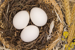 Three white eggs in  nest. Three white eggs in a nest Royalty Free Stock Photo