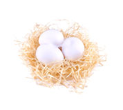 Three white eggs in the straw. Royalty Free Stock Image