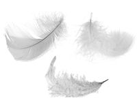 Three white feathers Royalty Free Stock Photography
