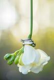 Three white gold wedding rings on a freesia. Royalty Free Stock Photo