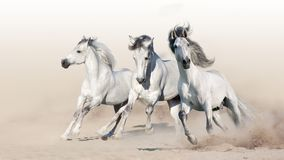 Free Three White Horse Stock Photography - 148150392