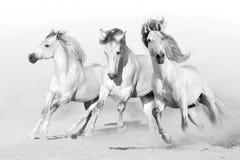White horses on white royalty free stock photography