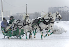 Three white horses. Bets are made. winter horses racing began at the moscow hippodrome Stock Photo
