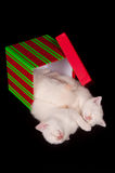 Three white kittens sleeping in a box Royalty Free Stock Images