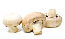 Three white mushrooms Stock Image