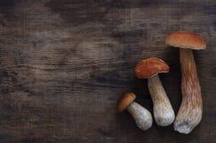 Three white mushrooms boletus. on dark wooden background raw food