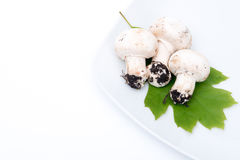 Three white mushrooms Stock Images