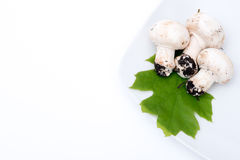 Three white mushrooms Royalty Free Stock Image