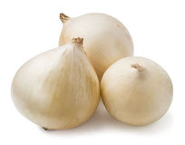 Three white onions Stock Photography