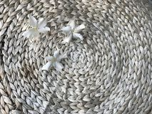 Three white othalanga flowers on water hyacinth round table. Three white othalanga flowers on weaved water hyacinth round table in natural light brown color with Stock Image