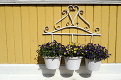 Three white pot with flowers on yellow wall Royalty Free Stock Photos