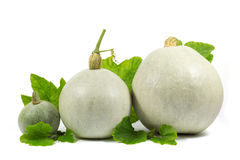 Three  White Pumpkins with Green Leaves Isolated on White Stock Photo