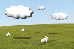 Three white rabbits on grass under cumulus clouds Royalty Free Stock Photo