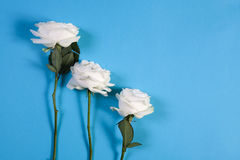 Three white roses on a blue background with an empty space for notes. Romantic card Stock Photo