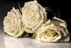 Three white roses Royalty Free Stock Images