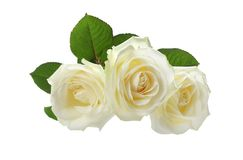 Three white roses on white. Three white roses isolated on white Stock Photography