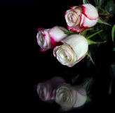 Three white roses with pink edges of petals on black Stock Photography