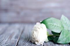 Three White Roses Stock Photography