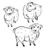 Three white sheeps. On white background Stock Photo